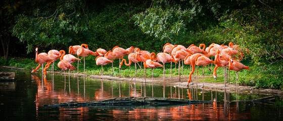 Foto op Textielframe Flamingo flamingo standing in water with reflection