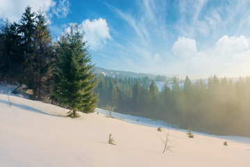 winter fairy tale landscape in mountains. beautiful nature scenery with coniferous forest in fog and some spruce trees on the snow covered slope. wonderful Christmas mood on misty morning