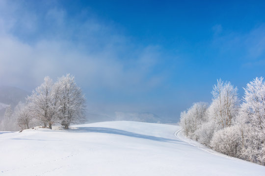 bunch of trees in hoarfrost on snow covered hill. sunny morning landscape. misty weather with blue sky. beautiful fairy tale winter scenery of white season in carpathian mountains