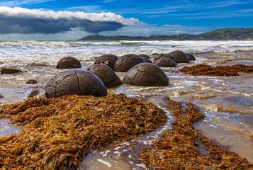 New Zealand, South Island. The Moeraki boulders (spherical rocks) at Otago coast