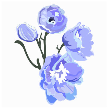 Delphinium or larkspur purple blooming flowers isolated on white background. Elegant detailed botanical drawing of wild flowering plant. Hand drawn realistic vector illustration