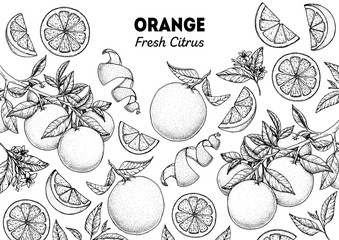 Orange hand drawn package design. Vector illustration. Orange sketch for menu design, brochure illustration. Black and white design. Citrus orange frame illustration. Can used for packaging design. Fototapete