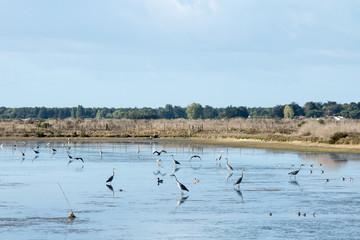 Réserve Naturelle Nationale de Lilleau sur l'Ile de Ré