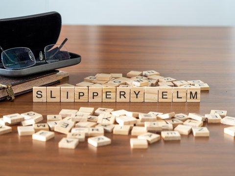 slippery elm the word or concept represented by wooden letter tiles