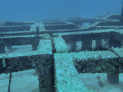 Artificial reef structure in the coral reef
