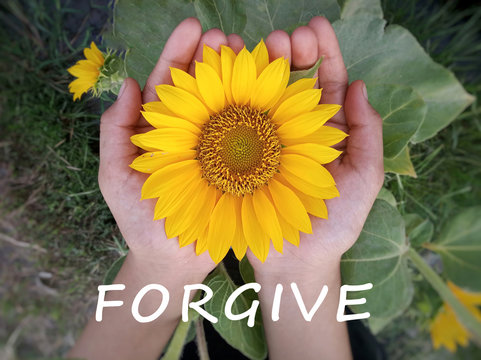 Inspirational quote - Forgive. With top view background of beautiful sunflower blossom in open hands. Forgiveness and acceptance concept.