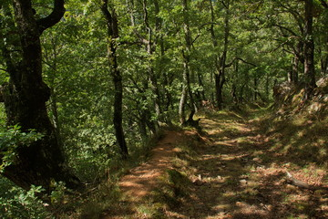 Hiking track from Pido to Las Ilces in national park Picos de Europa in Cantabria,Spain,Europe