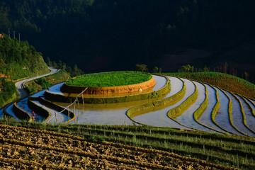 Garden Poster Rice fields Terraced rice field in Northwest Vietnam
