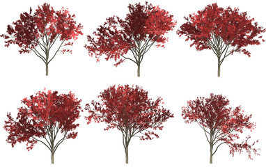 Trees set isolated on white background in autumn season. High-quality free stock image collection acer tree red, orange, yellow leafy isolated on white background. Good design elements, illustration