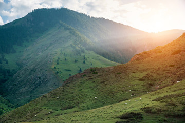 Poster Groen blauw Majestic green mountains landscape during sunrise
