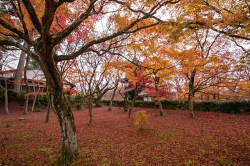 真如堂の紅葉絨毯