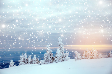Scenic winter landscape with snowy fir trees. Winter postcard.