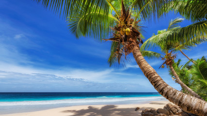 Wall Mural - Tropical paradise Beach. Sunny beach with coco palm and turquoise sea. Tropical beach concept.
