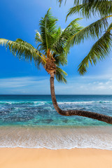 Fototapete - Tropical Paradise beach with white sand and coco palms. Summer vacation and tropical beach concept.