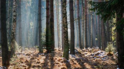 Keuken foto achterwand Bos in mist frosty forest - frostiger Wald