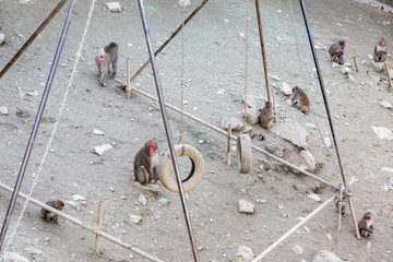 Foto op Canvas Aap 猿の遊び場