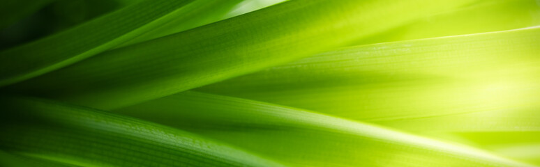 Nature of green leaf in garden using as background natural leaves cover page