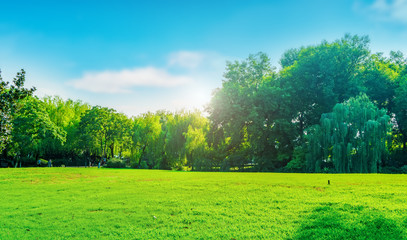 Foto auf AluDibond Lime grun Park sunshine grassland green forest..