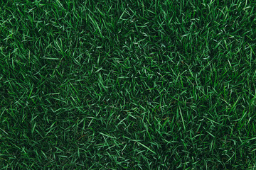 Foto auf AluDibond Gras Top view of green grass texture. for background.