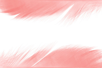 Beautiful frame coral pink vintage color trends feather pattern texture background
