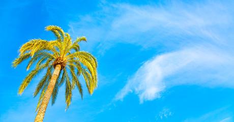 Blue sky and palm tree