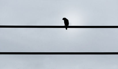 Black and white tone of a bord sitting on the wire in the empty sky. Minimal style picture.