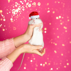 Female hands hold a funny gray rat in Santa Claus red hat on pink background.