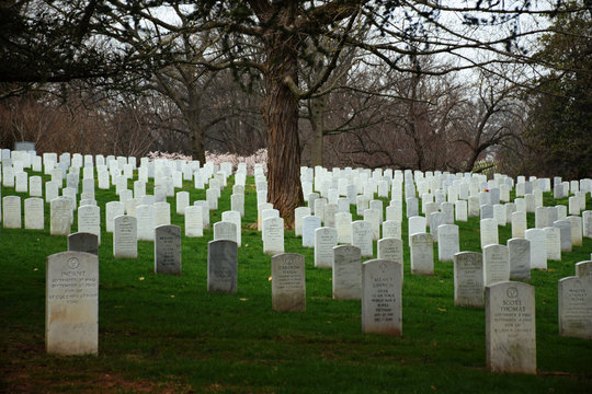 Arlington, Virginia - March 26 2017: Arlington National Cemetery with rows of tomb stones on green grass