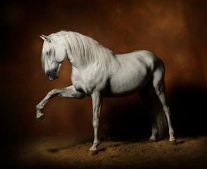 Cheval étalon lusitanien blanc spectaculaire