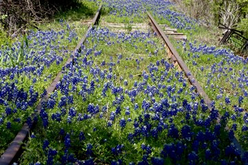 Fototapete - Abandoned railroad track with bluebonnets