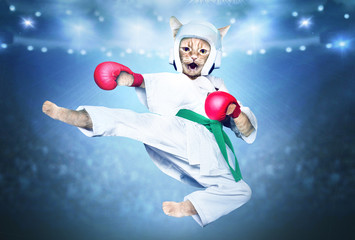 Red karate cat. Cat athlete in a kimono helmet and gloves.