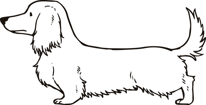 Long haired dachshund Outlines