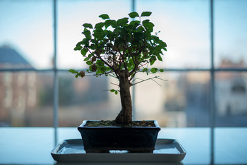 Bonsai Tree in Silhouette with Blurred City Background