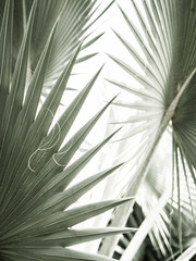 Self adhesive Wall Murals Palm tree Arty closeup picture of palm leaves, abstract pattern, nature background, retro toned poster