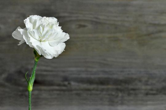 White carnation flower on wooden background