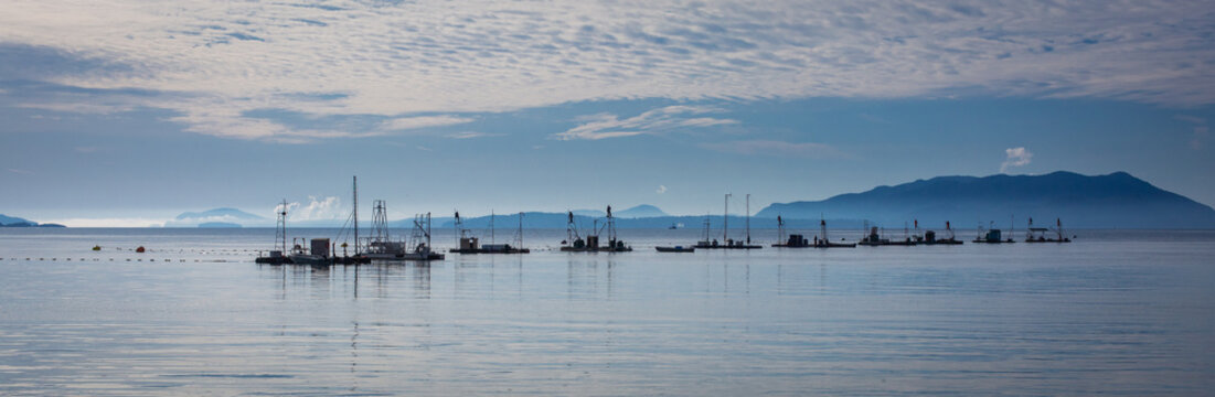 Boats in the water on an island in the Pacific Northwest