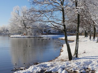 Wide view by the pond on a winter morning, with ducks swimming in the water