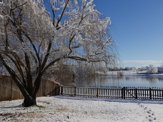 Wide shot of a willow tree covered with snow and ice in a backyard, with a pond in the background