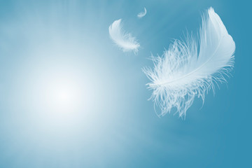 Soft white feather floating in the air Fotomurales