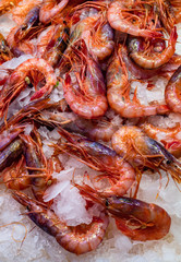 Fresh prawns at a fish market.