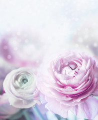 Lovely pastel flowers background. Soft focus. Close up of bloom with bokeh and petals