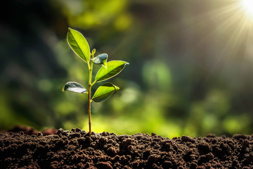 Tuinposter Planten small tree growing with sunshine in garden. eco concept