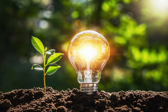 lightbulb tree with sunlight on soil. concept save world and energy power
