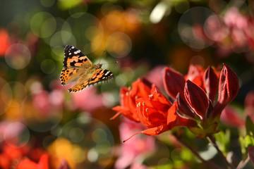 Schmetterling 590
