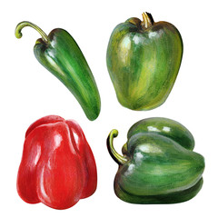 Fresh Ripe Bell Peppers And Hot Jalapeno Chili Acylic  Painting Art Isolated On white Background