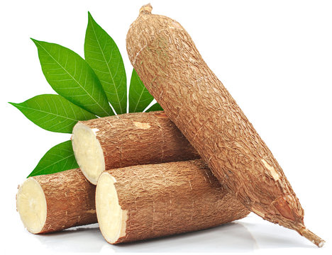 Cassava root isolated on white background