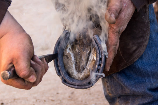 Smoke rises from horses hoof as farrier fits new metal horse shoe to its foot.