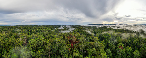 Aluminium Prints Dark grey Aerial view foggy and misty morning green landscape of tropical mangroves and Borneo Rain Forest in Sabah Borneo, Malaysia. Sustainable and biodiversity mangrove forest reserve.