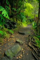 Door stickers Lush rainforest in Volcanoes National Park Big Island Hawaii, USA