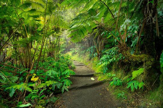 Lush rainforest in Volcanoes National Park Big Island Hawaii, USA